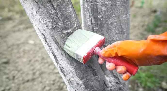 побелка дерева кистью