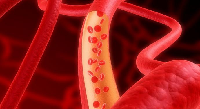 сосуд и эритроциты