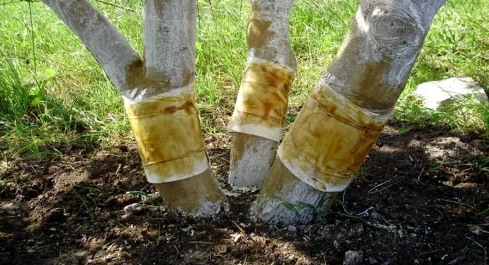 защита деревьев от вредителей