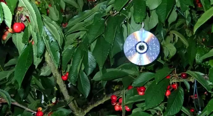 компакт диск на дереве