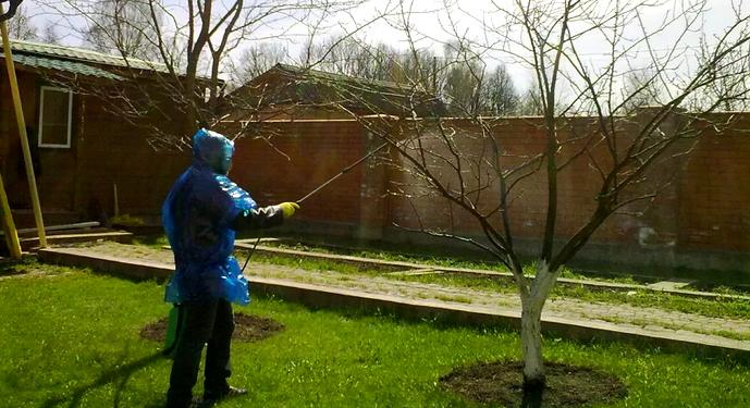 опрыскивание яблони медным купоросом