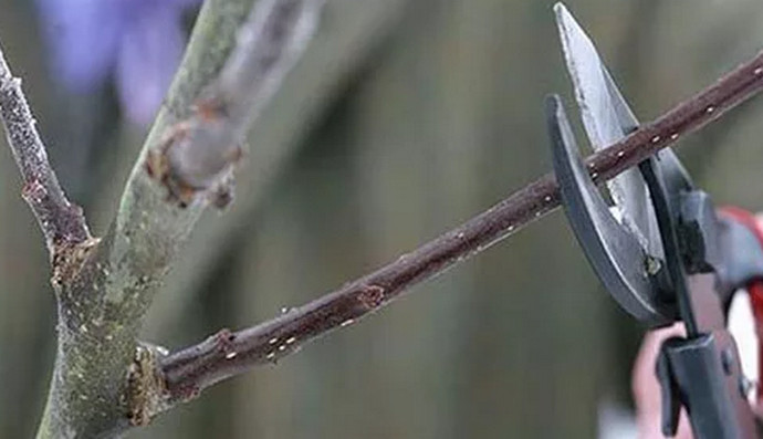 обрезка ветки
