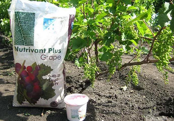 корм для винограда